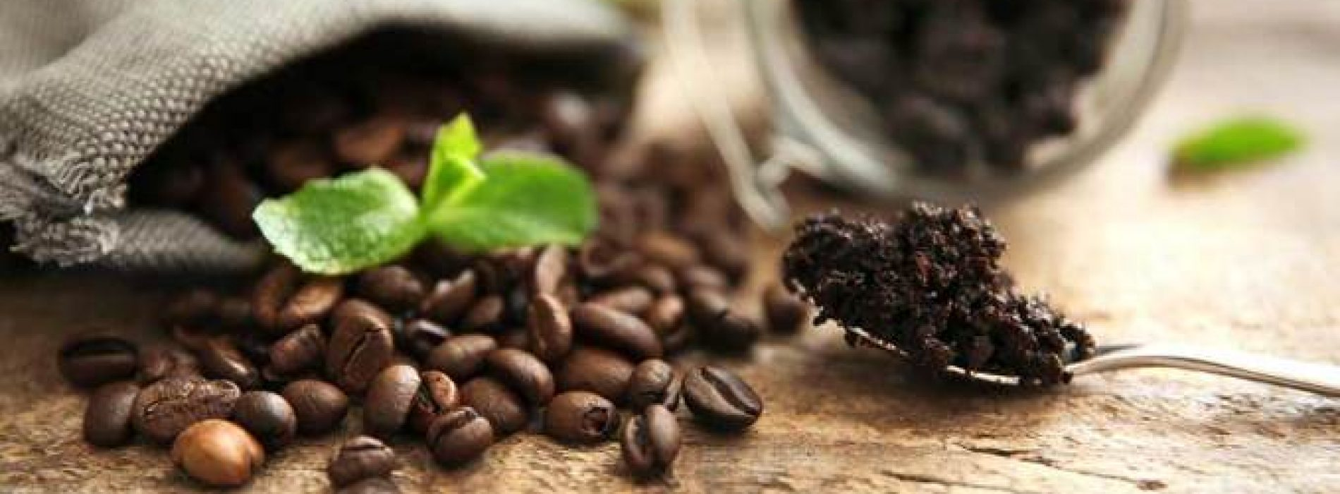 What Makes Coffee Organic